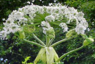 Linia kroplująca - efektywne podlewanie roślin ogrodowych